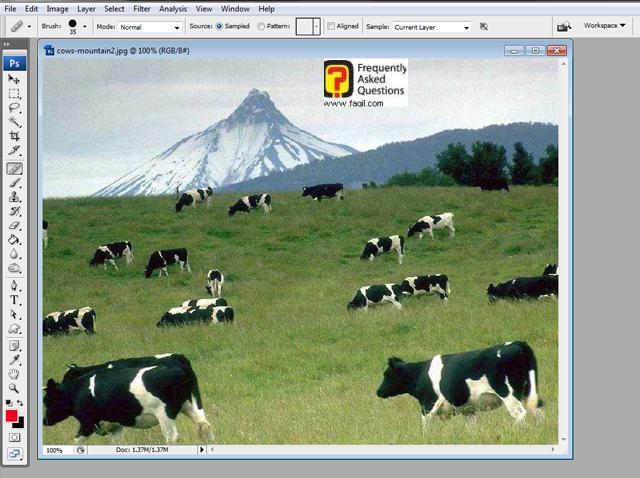 הפרה נעלמה בפוטושופ